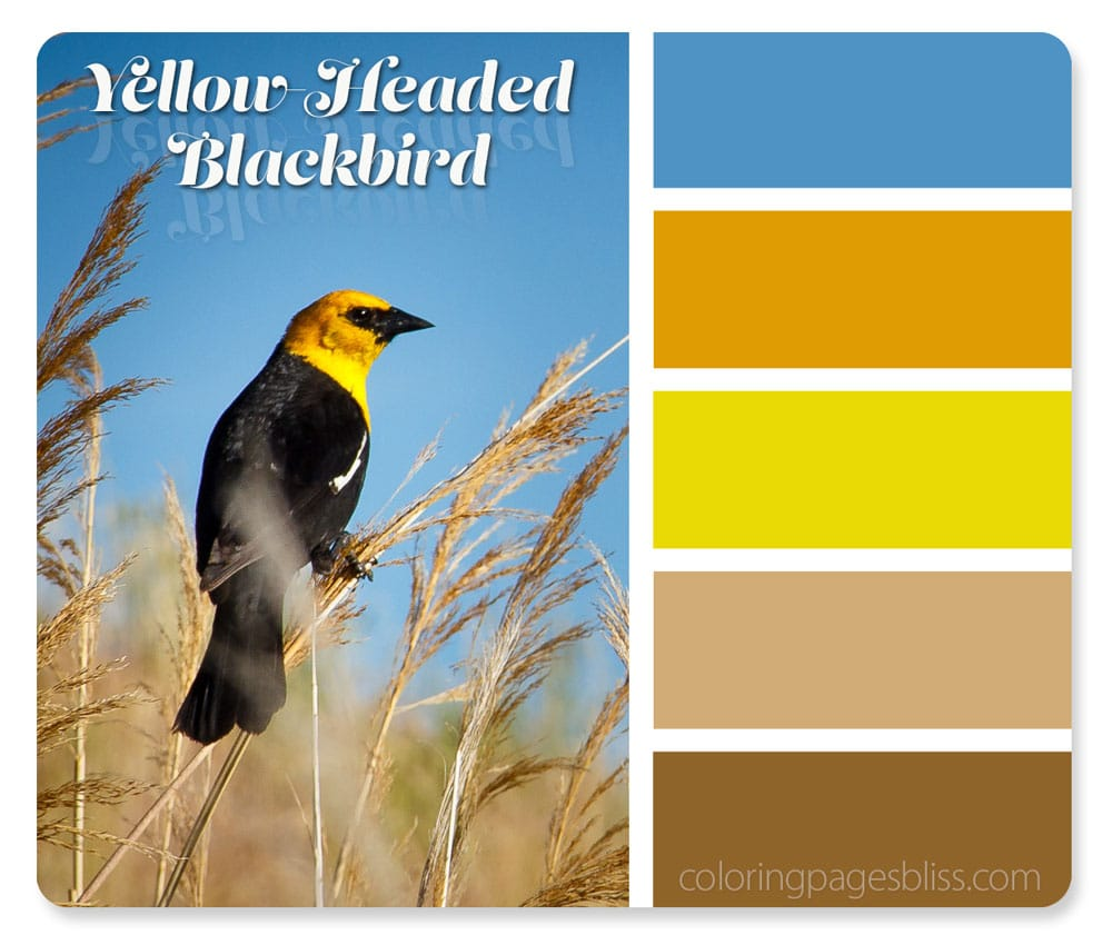 Yellow-Headed Blackbird Color Palette