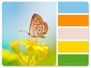Butterfly on Flower Color Palette