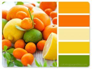 Citrus Fruit Color Palette