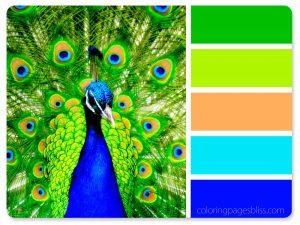 Peacock Color Palette