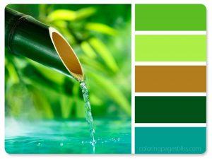 Bamboo Water Spout Color Palette