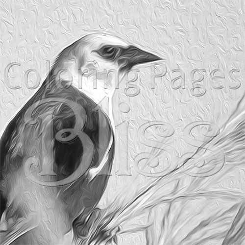 Yellow-headed Blackbird Grayscale Art Closeup