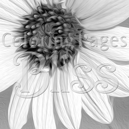 Closeup of Grayscale Sunflower