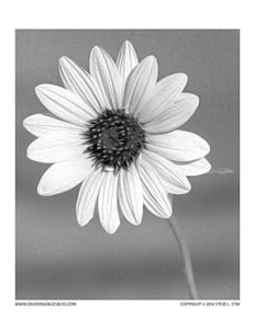 Wild Sunflower Grayscale Coloring Page