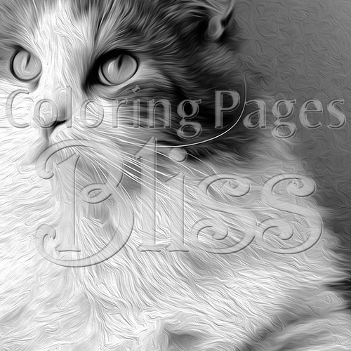 Closeup of Grayscale Siberian Cat