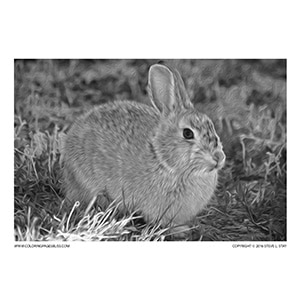 Bunny Rabbit Grayscale Coloring Page