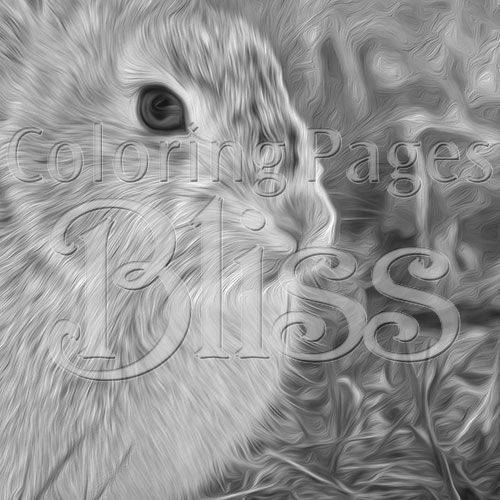 Closeup of Bunny Rabbit Grayscale Art