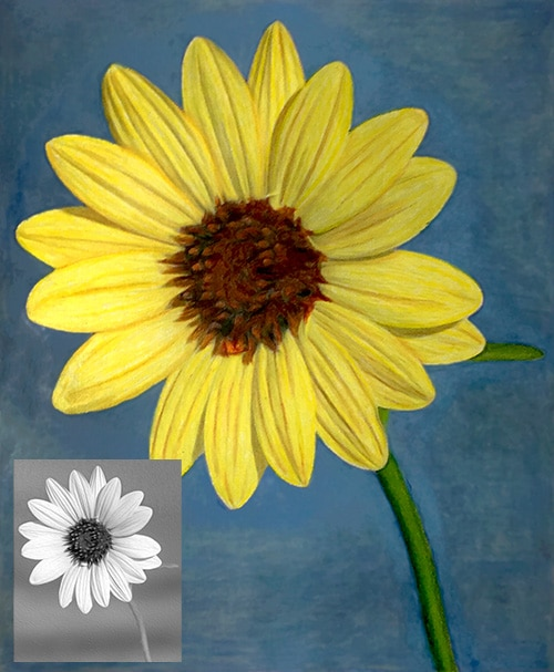 Colored Grayscale Sunflower