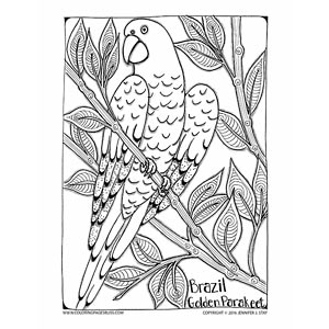 Brazil Golden Parakeet Coloring Page