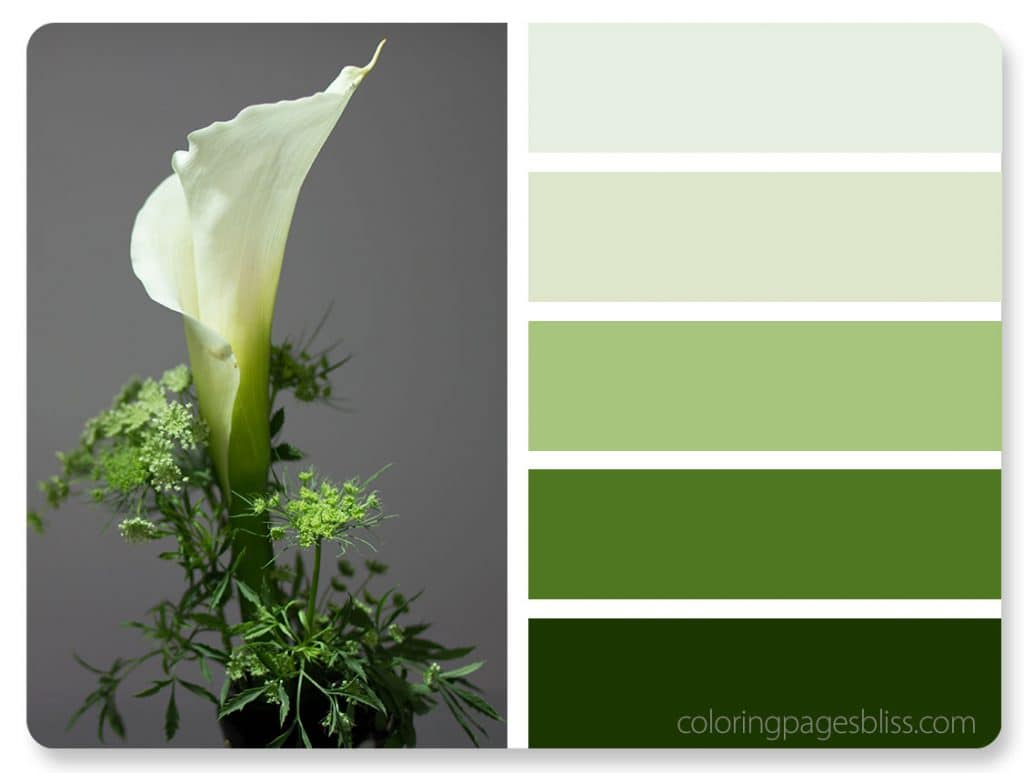Calla Lily Flower Color Palette