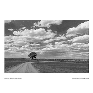 Lone Tree on Country Road Grayscale Coloring Page