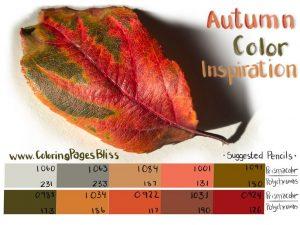 Autumn Leaf Color Palette