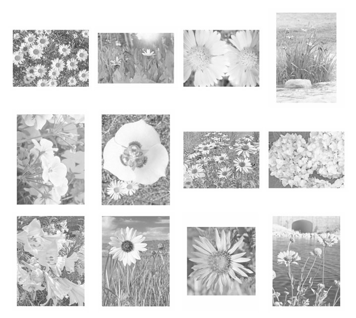 Grayscale Flower Coloring Pages