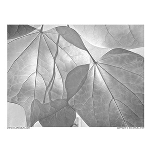 Fall Leaves Closeup Grayscale