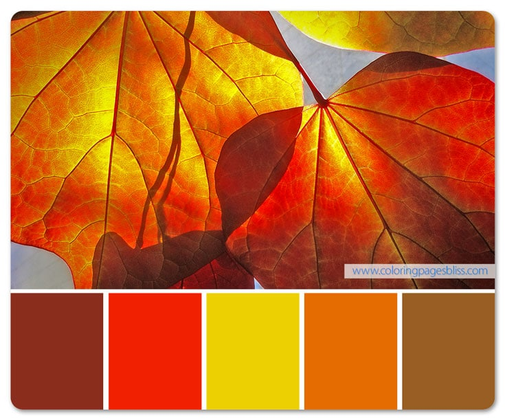Fall Leaves Closeup Color Palette