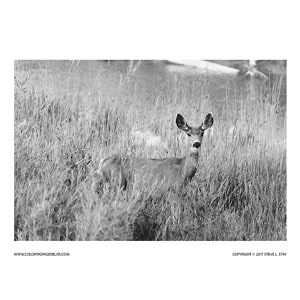 Deer in Grass by River Grayscale Coloring Page