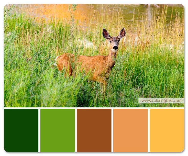 Deer in Field Color Palette