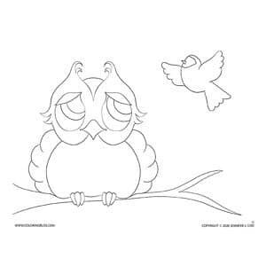 Owl and Bird - No Details