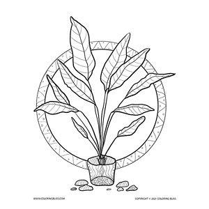 Desert Potted Plant