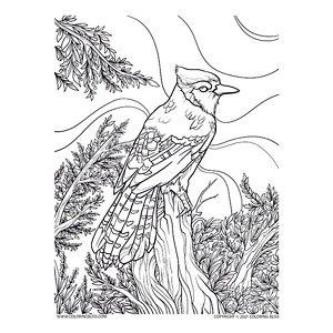 Cardinal Bird on Tree